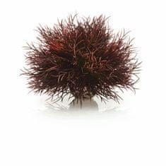 Oase Akváriová dekorácia biOrb Aquatic sea lily crimson