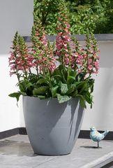STEWART korito za cvijeće, BETON PLANTER, 53 cm