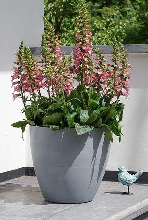 STEWART cvetlično korito, BETON PLANTER, 53 cm