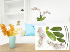 Dimex Dekoračné nálepky na stenu Orchidea - 50 x 70 cm