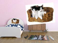 Dimex Dekoračné nálepky na stenu Mačiatka v košíku - 50 x 70 cm