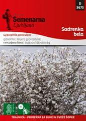 Semenarna Ljubljana Gipsofila bijela, D3675, mala vrečica