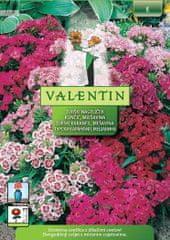 Valentin turški nageljček 3133