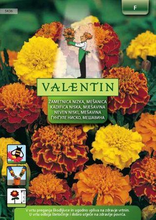 Valentin nizka žametnica Tagetes, mešanica, 5436