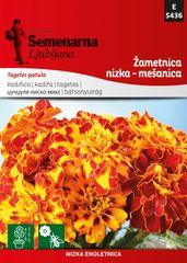Semenarna Ljubljana žametnica nizka - mešanica D5436, mala vrečka