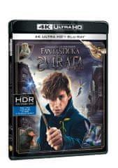 Fantastická zvířata a kde je najít (2 disky) - Blu-ray + 4K Ultra HD