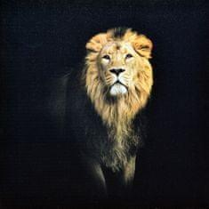 Superposter Obraz na plátne 70x70 Lev