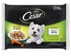 Cesar mokra hrana za pse, v želeju, 4 x 100 g