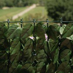 """Verdemax Műsövény  """"Verdecor"""" babérlevelekkel 1,5m x 3m"""