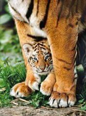 Clementoni Bengálsky tiger medzi nohami matky 500 dielikov