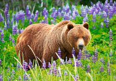 Castorland Bear on the meadow 500 dielikov