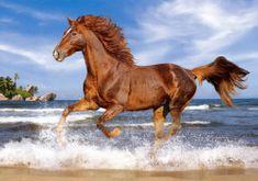 Castorland Kôň na pláži 500 dielikov
