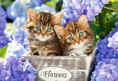 Castorland Cute kittens 1500 dielikov