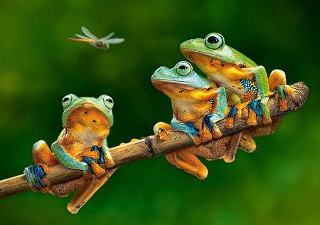 Castorland Puzzle 500 dílků The Frog Companions