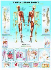 EuroGraphics Ľudské telo 1000 dielikov