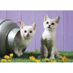 Schmidt Cat sisters 500 dielikov