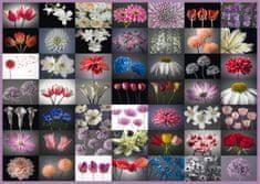 Schmidt Flower greeting 2000 dielikov