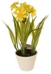 EverGreen Dekoratívne narcisy v kvetináči, výška 22 cm - žlté