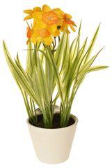 EverGreen Dekoratívne narcisy v kvetináči, výška 22 cm - oranžové