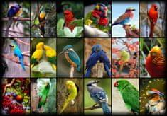 Grafika Puzzle 1000 db Collage - World's Most Beautiful Birds