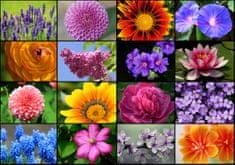 Grafika Puzzle 1000 db Collage - Spring Flowers