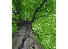 Dimex Fototapeta MS-3-0101 Koruna stromu 225 x 250 cm