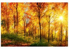 Dimex Fototapeta MS-5-0067 Slnečný les 375 x 250 cm
