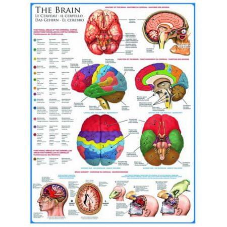 EuroGraphics Puzzle 1000 db Jigsaw Puzzle - 1000 db - The Brain