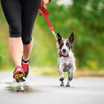 Tractive GPS Tracking device, GPS obojek pro psy, vodotěsný, bezpečný, lehký, odolný