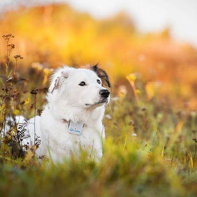 Tractive GPS Tracking device, GPS obojek pro psy, live tracking, sledování psa, virtuální plot