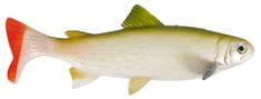 Unicat Gumová Nástraha Trout GT 15 cm 50 g 2 ks