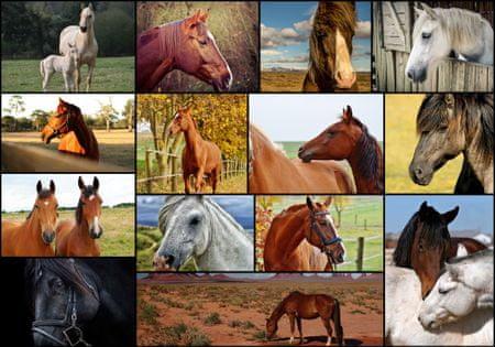 Grafika Puzzle 1000 db Collage - Horses