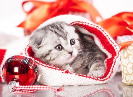 Grafika Puzzle 300 dílků Christmas Kitten