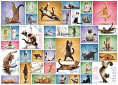 EuroGraphics Puzzle Kočičí jóga 1000 dílků
