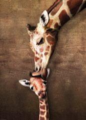 EuroGraphics Puzzle Polibek žirafy 1000 dílků