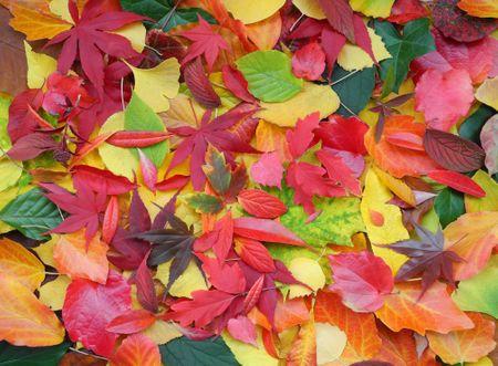 Grafika Puzzle 2000 db Autumn Leaves