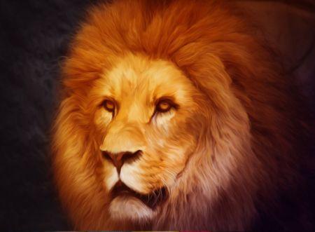 Grafika Puzzle 2000 db Lion