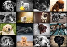 Grafika Puzzle 1000 db Collage - Dogs
