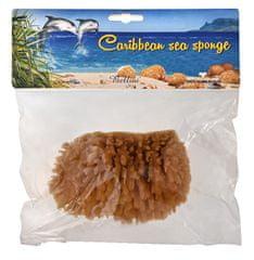 Bellini Karibská prírodné morská huba - MINERÁLNE