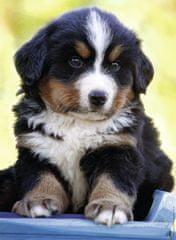 Nathan Cute puppy 500 dielikov