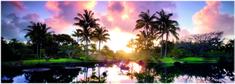 Heye Humboldt: Palm Trees 2000 dielikov