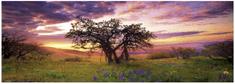 Heye Humboldt: Dub, Columbia Hills State Park 2000 dielikov