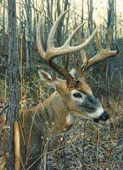 Cobble Hill Kemp: White-tailed deer /51842/ 1000 dielikov