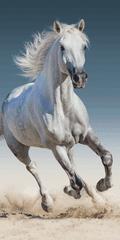 Jerry Fabrics 03 Konj brisača