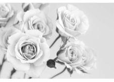 Dimex Fototapeta MS-5-5505-SK Ruže čiernobiele 375 x 250 cm