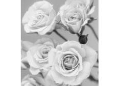 Dimex Fototapeta MS-3-5505-SK Ruže čiernobiele 225 x 250 cm