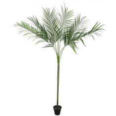 Europalms Areca palma s velkými listy, 180 cm