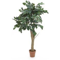 Europalms Dub lesní 180 cm - použito (82506826)