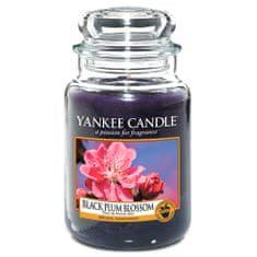 Yankee Candle Świeca w szklanym słoju Świeca Yankee, Kwiat czarnej śliwki, 623 g