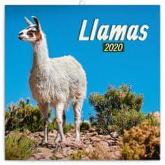 Poznámkový kalendář Lamy 2020